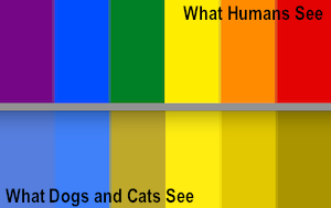 dogs-cats-colorblind-deuteranopia1